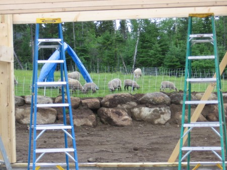 no work today; sheep grazing behind the quiet project site