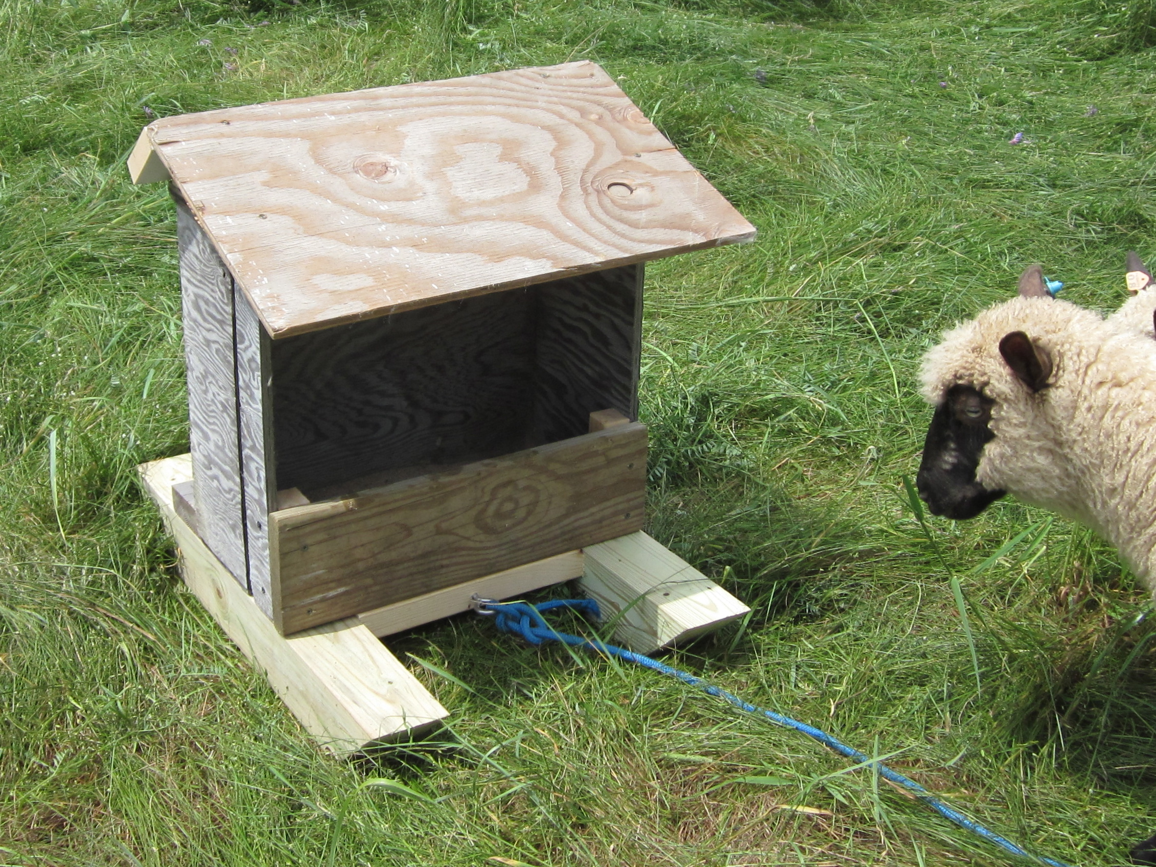 A Portable Sheep Mineral Feeder