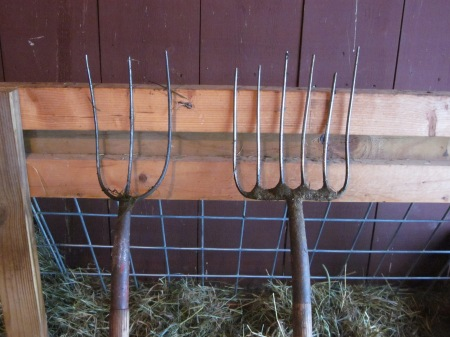 two pitchforks: hay fork, left; manure fork, right